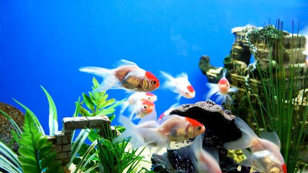 Aquarium in Chennai - by Aqua Pro, Chennai