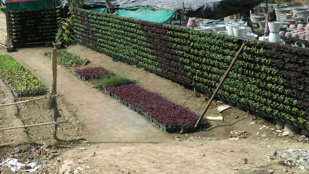 It's our nursery green Bio wall Wich use for plants growth and development. Without any delay we had done the project in 3 to 5 days only.  from  R.S ENTERPRISES west Delhi