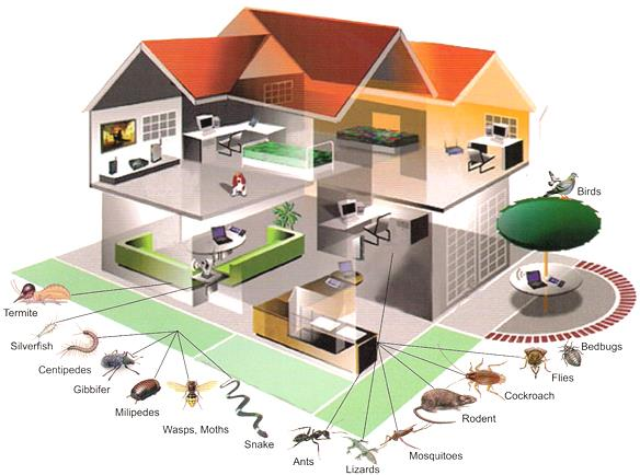 Protecting Your Home and Business With Customized And Sector Specific Services. Expert Knowledge In Pest and Pest Trends. Applying Innovative Tools and Techniques For Effective Pest Management. - by Pest Control Services | Visakhapatnam, Visakhapatnam