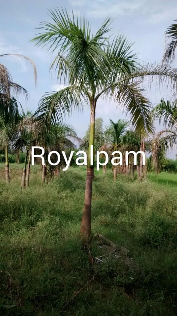 Make your city clean and pollution free by planting Roadside Plants. Contact us now!! Be Healthy, Be Green.  Haryali India - Roadside Plants Provider in Delhi - by RAK Nursery & Farm House - Palm Leaves, New Delhi