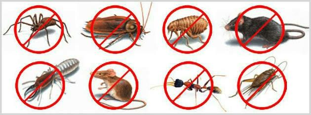 Unique Domestic Pest Control Service Provider in Nehru Nagar Kanjurmarg - by Spectrum Pest Control Services, Mumbai