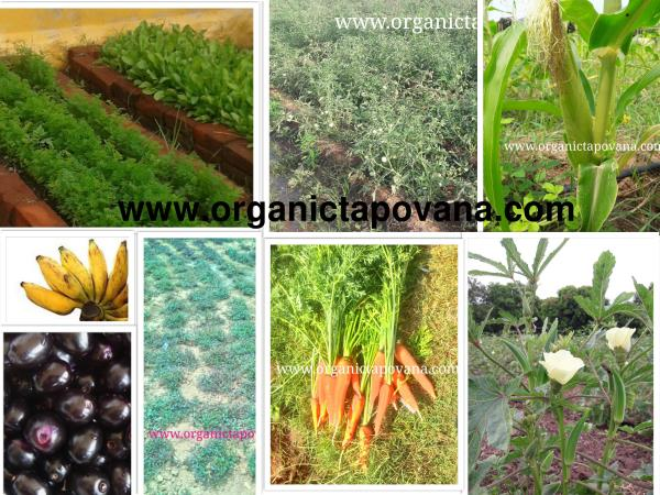 Organic Vegetables online in Chennai  What is the real gift that you are giving to your Loved ones?  Is it Costly Gifts, Trendy Dresses, Valuable jewelry....?It may be.  But the real gift and Prize that you give it to your loved ones, kids  - by TAPOVANA ORGANIC FARMS, Chennai