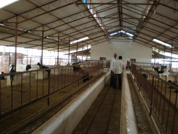 Space Requirement for Goat Project       Basically Goat prefers for dry, Clean and Solid Floor, WEt Places affect their Milk Production and Growth. They need Good shelters or shed for them to protect from nature distraction like rain, heavy - by Farm Business India-9884442068, Chennai