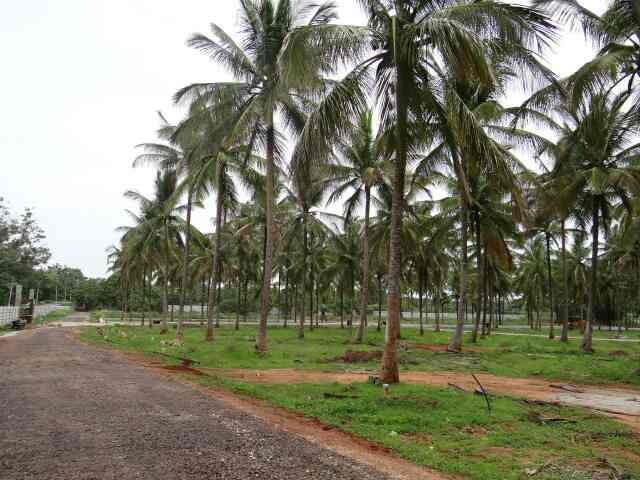 Sites behind Airport.. 40x60, immediate registration.. - by GSS Project Consultant (P) Ltd, Mysore