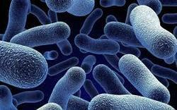 Probiotic Manufacturer   We Mitushi Biopharma is one if the leading manufacturer and suppliers of Probiotic In Ahmedabad Gujarat India