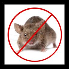 We are the prominent pest control service providers who are engaged in offering best Rodent Control services to our clients. We eradicate even the signs of the existence of the rodents with the help of our rodent control services. Our rodent control services help in preventing leptospirosis, trichinosis, typhoid fever, plague and so on. The rodent control services of our firm are active in day and night. Our firm proffers these Rodent Control services at very minimum prices. Rats and rodents are one of the most dangerous household pests and must be controlled immediately. They chew through walls, leave droppings and pose a significant health risk to humans. There are many different rat control methods that you can adopt to free your home of these pests.  We are leading service Rodent Control in vadodara
