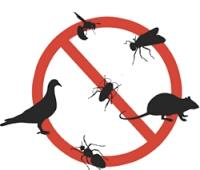 pest control services in naranpura Ahmedabad   we are best quality service providers of pest control in Ahmedabad