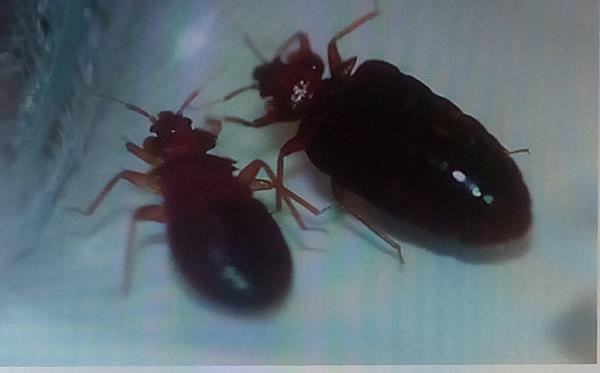 Apartment Building Has Bed Bugs bed bugs treatment we are hire only the best rates bedbugs pest