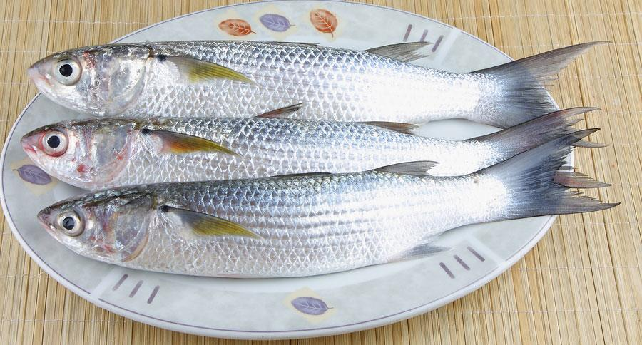 Mullet Suppliers in Chennai  We are supplying Sea Bream Fish and all other kinds of Sea Foods likeMullet Fish, Sea Foods Mullet Fish supplying.