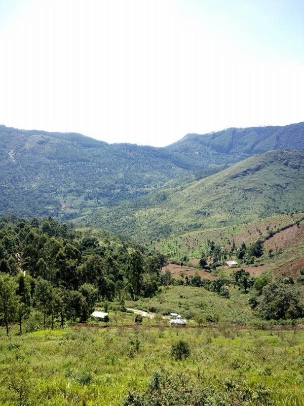 Our plot features  We laid out bigger size plots in a vast expanse of the land of 4.2 acres divided into 32 Nos plots only. Lots of open space has been provided for the purpose of parks so that nature and beauty are not compromised thus we  - by Plots For Sale. Premium Guest House In Kodaikkanal for Stay, Kodaikanal