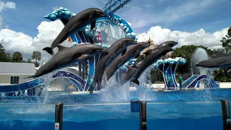 Travel Agent in South Delhi, Delhi.  Orlando's SeaWorld, with its huge aquariums, dolphin and whale shows, touch pools, and extensive list of rides, draws large family crowd. It also allows opportunities for close up encounters with dolphin - by Karavan Holidays  +919810060052, Delhi