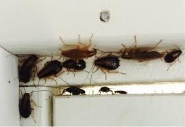 Pest in Faridabad is becoming headache for people living in Faridabad. Pest are entering any premise for shelter and food where ever Pest find hide out Pest make shelter over there. In order to maintain residential and commercial area from  - by Golden HiCare Pest Control, Faridabad, Faridabad
