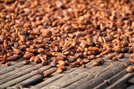 Cocoa Beans  The cocoa bean, also cacao bean or simply cocoa or cacao is the dried and fully fermented fatty seed of Theobroma cacao, from which cocoa solids  Manufacturers Of Cocoa Beans Cocoa Beans Manufacturer - by TWIN TRACK ENGINEERING SPARES OF INDIA, Coimbatore