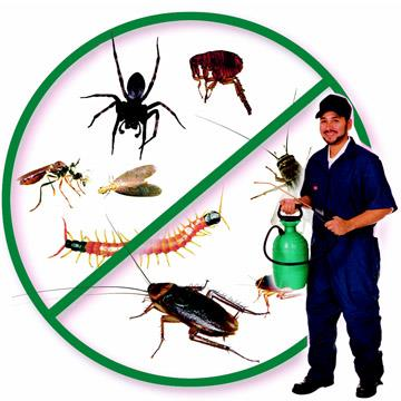 Specialisation General Insects Pest Control. Rodent control services Anti Termite Treatment . Fumigation and prophylaxis treatment. Marine pest management. Stored product insects pest control. Herbal Pest Control / Gel Treatment.