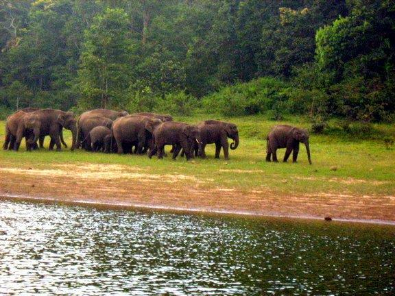 Kerala Tour Package Theakkdy - Thekkady is the location of the Periyar National Park, which is an important Tourist Attraction in the Kerala state of India