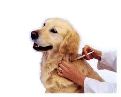 General treatment in dog - by Pet Care Clinic,Dog clinic, Kota
