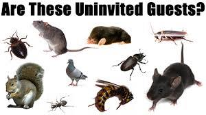 Underestimating Pest in India can cause severe fatalities. Avoid Pest horror in India get Expert help to remove Pest in India. Call Pest Control India for Pest free home in India. Our Pest Control India professional will make sure Pest does - by Golden HiCare Termite Pest Control,New Delhi, New Delhi