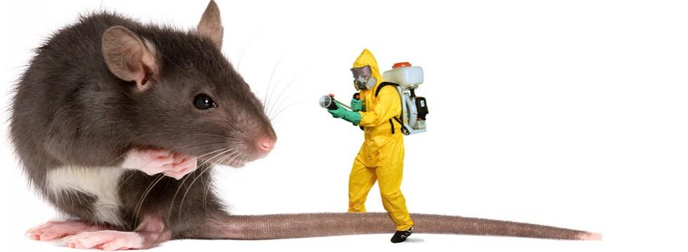 Leveraging on years of knowledge, Advantage Pest control hold proficiency in offering  Pest control services in saket delhi .  Pest Control services are performed in harmony with set quality norms. Offered services are very much appreciated by valued clients. Clients can obtain these services from us at market foremost price. Best Pest control services in saket delhi Bed bug treatment in saket delhi Rodent control in saket delhi Commercial pest control services in saket delhi Termite pest control service in saket delhi Residential pest control service in saket delhi Commercial pest control services in delhi ncr noida gurgao Pest control services in saket delhi