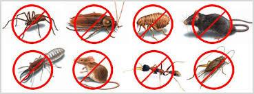 Pest Control Services In Kochi, Pest Control Service, Pest, Termite Control Services In Kochi, Anti-Termite Control Services in Kochi, Anti-Termite Treatment In Kochi, Anti-Termite Control In kochi, Anti Termite Post Construction In Kochi, Anti Termite Pre-Construction In Kochi, Cockroach Control Servicesc In Kochi, Fly Control Services In Kochi,