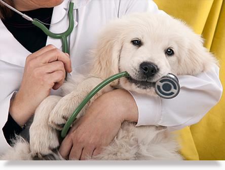 Clinic For Pets in Anna nagar,  We are the Most Wonders full Clinic running in Anna Nagar, with Most Experienced Doctor Caring for your pets like Dogs, Cats, and So On.