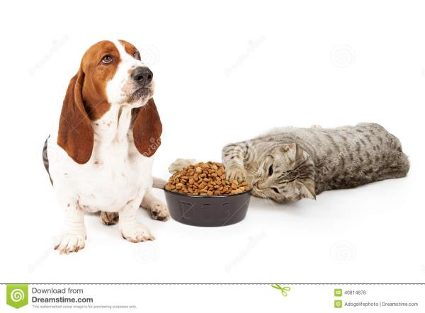 Cats Foods Shop in Chennai,  We are Selling All Kinds of Cats Foods and all so for other Pets. We are having Both Imported Foods and Healthy Foods For Your Pets.