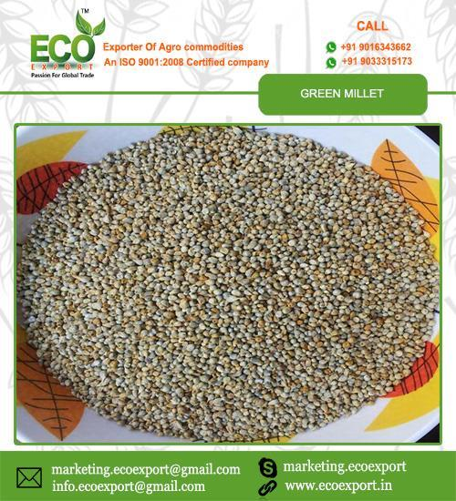 Eco Export is exporter and supplier of Green Millet from India. Green Millet is used to animal feed and bird feed. We are exporting green millet to african and middle east countries.