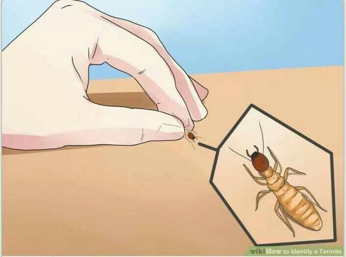 Responses to Pest Control methods