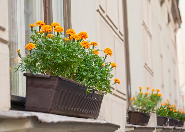 One naturally helpful strategy is to add mosquito repellent plants in and around your home and garden.