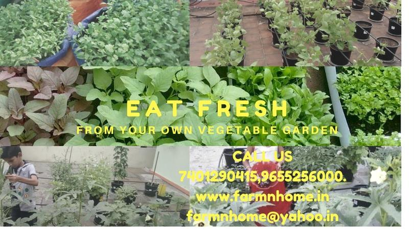 Eat fresh from your vegetable garden        - by FARM N HOME, Coimbatore