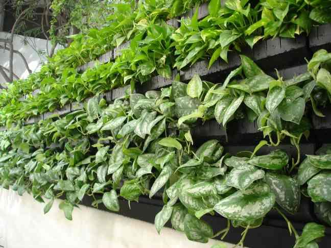 Green wall Punjab, Mohali we recently work on base of Thailand Green wall thought and really we got many best results and ideas of green vertical wall. our client and architect feel glad and give us many other references for work. Form  R.SEnterprises Ranjeet Singh 9990154546/9911303925