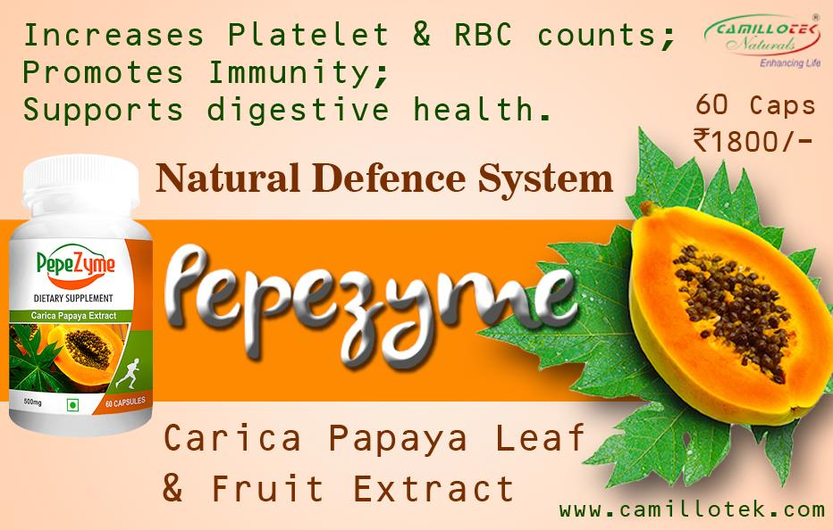 Carica Papaya Leaf & Fruit Extract increase Platelet and RBC counts; Promotes immunity. Herbal Papaya is an amazing supplement. Papaya naturally delivers a variety of enzymes that support digestive health.  Papaya Enzyme Supplements, green papaya supplements, Papaya Enzyme Tablets, Papaya Supplement for Digestive Health, Papaya Dietary Supplements, protein papain supplements, Papaya digestive enzyme supplement, Shop Papaya Enzyme supplements, best papaya supplement, Papaya Leaf Extract, Digestive Health Supplements, all-natural supplement, Papaya Leaf Extract Capsules, carica papaya Capsules, Papaya probiotic capsules, green papaya capsules.  Papaya supplement manufacturers, Papaya supplement suppliers, Papaya  supplement exporters wholesalers, traders in Chennai, India.