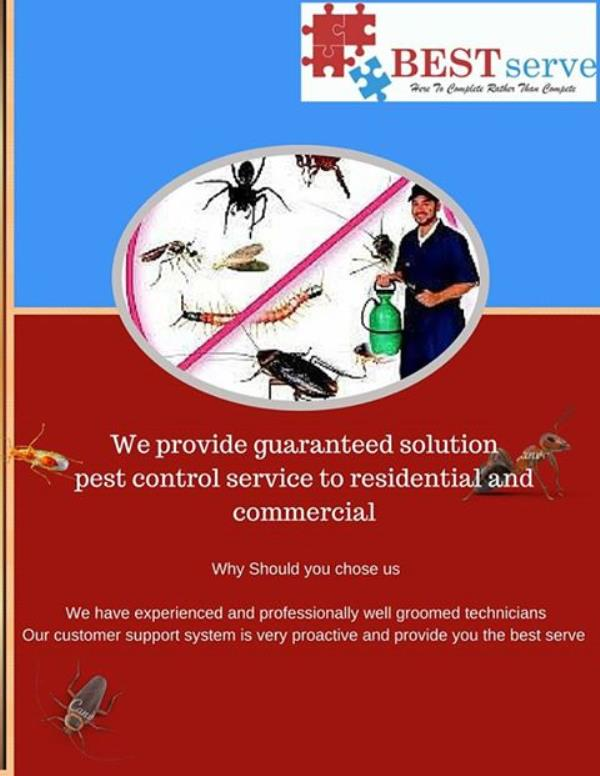 pest control in Bang