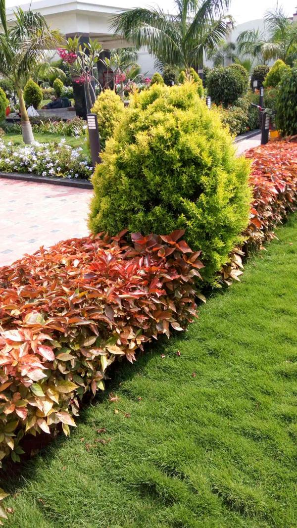 Garden Landscaping Contractor in Bangalore. Green Line Landscape has been providing landscaping and gardening services in and around Bangalore area for over many years. At Green Line Landscape, our major aim is to provide world-class services related to Landscaping, Wall Gardens and Garden Maintenance.