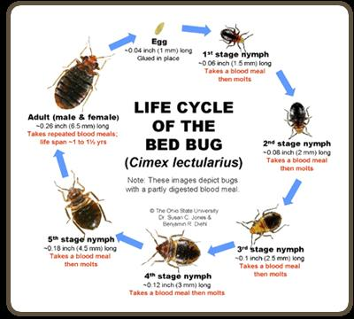 Bed Bugs are parasit