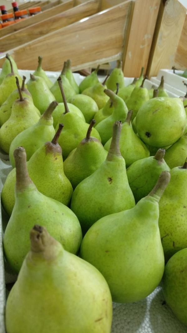 Season of Fresh pear is h