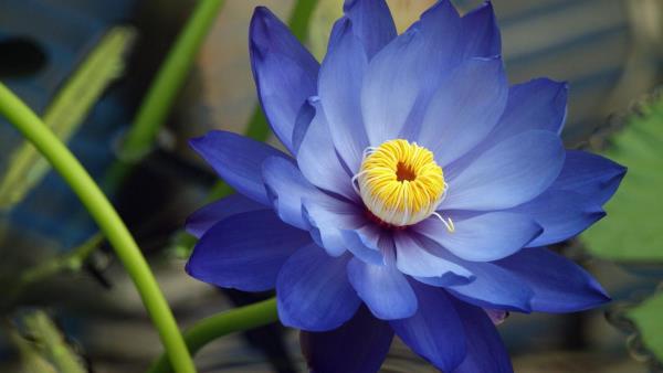 Flower growth stimulants