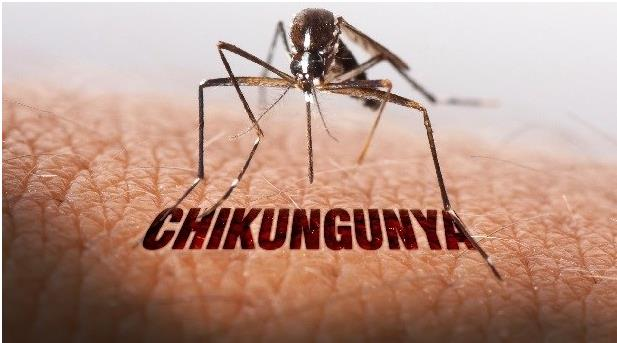 All you need to know about Chikungunya! All you need to know about Chikungunya!  Chikungunya is a mosquito borne viral disease caused by the Chikungunya Virus.The virus is typically spread by two types of mosquitoes namely Aedes albopictus and Aedes aegypti and bite normally in the day time, but you can't be very sure. Keeping in view the increasing terror of Chikungunya in Delhi, Bansal Global Hospital brings to you all that you need to know about Chikungunya:  Some important points you should know:  The disease has some common symptoms with dengue and zika virus which can lead to misdiagnosis and therefore wrong line of treatment. Make sure you are considering the advice of specialty doctors to avoid such incidences which can be life threatening. As a matter of fact, there is no recognized cure of the diseases. The treatment is meant to relieve the patients from the symptoms. The disease is wide spread in Africa, Asia, and the Indian Subcontinent. It can reoccur unlike other viral diseases which provide immunity against itself. Symptoms:  The symptoms of Chikungunya usually show within 2-12 days after the exposure to the virus, which can be from various mediums. The general symptoms include:  Sudden onset of fever. Joint pain, which usually lasts even after the disease is cured. It can even stay on till years. Headache and Nausea. Small red spots/rashes all over the body. Diagnosis:  Visit your nearest specialty health care centre if you see any of the symptoms. Tell your doctor about your recent travels, which might include an affected place. The doctor after studying the symptoms, will recommend a few blood tests to check if it is normal flu, dengue, or Chikungunya. You will then be advised rest and medication accordingly. Treatment:  There is no vaccine yet discovered to provide immunity against the disease. Though few points help in reducing the symptoms:  Be at complete rest. Drink lots of water and other fluids to keep yourself hydrated. If you are no alternated medication for any other ailment, inform your doctor about it before taking additional drugs. Take medicines prescribed by the doctor to get rid of fever and pain. Prevention:  As the disease is mosquito-borne and is spread by mosquitoes only, the only way to protect yourself is to stay away from mosquitoes. You should keep in mind the following points:  Close windows in the evening. Use mosquito repellents or mosquito nets while sleeping. Avoid going to crowded places during the outbreak. Don't let water collect in pots and old utensils. Clean and dry your water coolers regularly. All of this information should be spread among friends and family as well. Awareness makes you conscious of your surrounding and keeps you away from probable danger. Don't let yourself or your dear ones fall into the trap of Chikungunya. A aware person is a safe person after all !