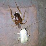 Cockroach Control In Chennai  Are you looking for Pest Control Services In Chennai...  We Offer a full line of Pest Control Services ..  25 years Experience  Odorless, Economical , Non-Toxic  Call 9841080005/04465489090 www.pestcontrolchennai.com
