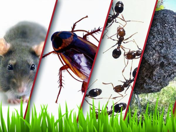 Pest Control Service from Jaipur has been servicing clients for Pest Control Treatment, paste control and Anti Termite Treatment. We use 4th Generation pesticides and treatment techniques for effective Pest Control which do not stain. Our Pest Control Treatments are odorless.
