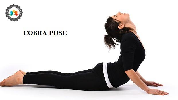 HOW TO PERFORM COBRA POSE (BHUJANGASANA) Bhujangasana or Cobra pose is one of the important yoga asana for beginners. In the final stage, the yoga pose is looks like as a hood of a snake or cobra that's why named as Cobra pose or Bhujangasana STEPS OF COBRA POSE Let's know how to perform Bhujangasana step by step. Here, the different steps have been explained with correct technique of Cobra pose systematically and scientifically. Each step has been elaborated with the help of Yoga pose so that maximum benefits can be achieved. Lie down on the stomach by keeping your legs together. Make a gap of 1-2 feet between the legs if somebody has backache. Put your palms besides your shoulder and the head should rest on the ground.  With inhaling raise your head up to your navel region and try to see the roof. Maintain the position till 10 to 60 seconds with steadily inhaling and exhaling. Come to the original position slowly with deep exhalation. Repeat the process for 3 to 5 times. Cobra pose (Bhujangasana) benefits Here are the following benefits of cobra pose-  1.Relieves backache  2.Good for kidney  3.Stress buster  4.Good for Digestion  5.Slipped disc  6.Remedy for thyroid gland 7.Improves lung capacity As it is a beginner's yoga pose it must be performed under the expert's supervision. If you want to learn yoga under the guidance of experienced yoga gurus you can join 200 Hours Yoga Teacher Training Program (YTTC) which is conducted by one of the best and Registered Yoga School (RYS), Yoga Vedanta at Rishikesh- Yoga capital of the world. This training program is mainly for the beginner's. Here you will get the chance to practice yoga under the guidance of experienced instructors and in the pleasant environment of Rishikesh. For more information about this yoga school you can visit us at- http://yoga-vedanta.in