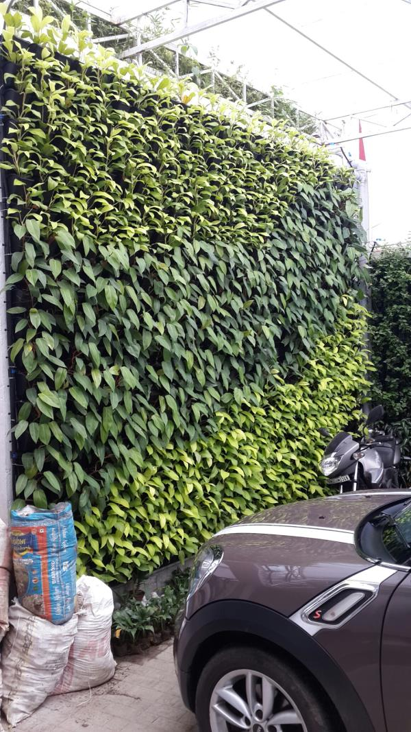 VERTICAL GARDEN MANUFACTURER IN KOLKATA , VERTICAL GARDEN MAKER IN KOLKATA, VERTICAL  GARDEN SUPPLIER IN
