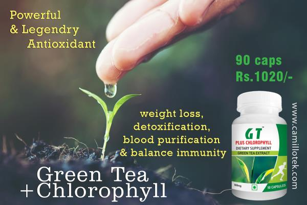 Green Tea Plus Chlorophyll pills used for weight loss, blood purification, detoxification and balance human immune system. Buy green tea tablets online, Green tea pills online, Green tea chlorophyll supplement, chlorophyll green tea capsules, weight loss green tea, lose weight by green tea, metabolic balance by green tea and control fat by green tea. Green tea pills manufacturers, green tea pills suppliers, green tea pills exporters wholesalers, traders in Chennai, India.