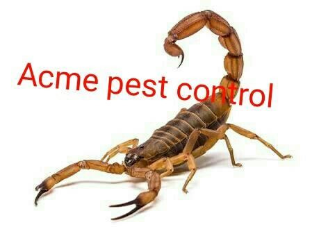 Pest Control Services In Chennai   Best Pest Control services in Chennai done by expert professionals. Cockroach, Mosquito, Bedbugs, Rodent, Pigeon, Ant, Honeybee,  www.pestcontrolchennai.com  098410 80005