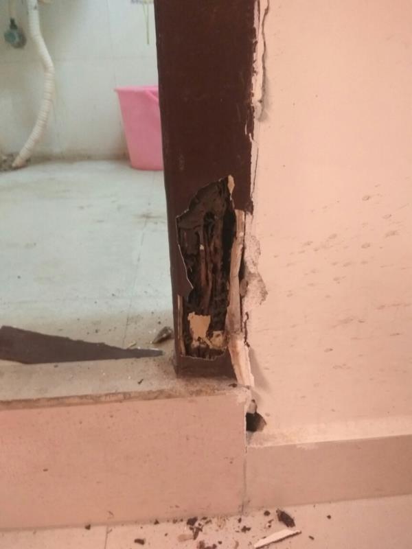 Termite Control in Chenna