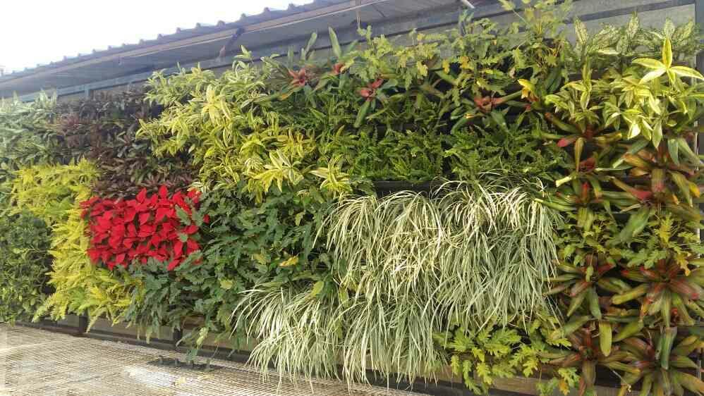 Leading Bio Green Wall, Vertical Garden Manufacturer In Delhi Ncr, Vertical  Green Wall Garden In Gurgaon, Vertical Green Wall Garden Manufacturer In ...