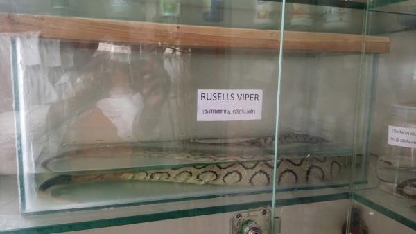 Snake Bite Treatment Hospital in Krishnagiri