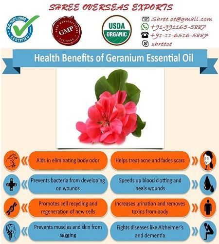 2018 Excellent Quality & Reasonable Rate of Organic Geranium Oil Geranium Essential Oil (Pelargonium Graveolens)  Geranium oil Extracted through Steam Distillation from the leaves and task plant of the Pelargoneum Graveolens and flowers of plants organically grown South Africa and in Egypt. The best quality Geranium oil is used in high grade perfumes and flavours. On the other hand, the low quality oil is used for perfuming in creams, soaps and toiletries. Both the Egyptian