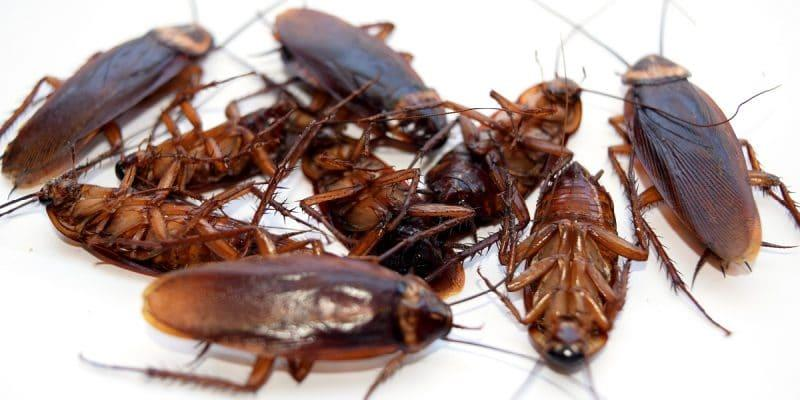 What you get with ACME - Pest Control Service in Chennai   •	100% Satisfaction Guarantee – we understand you just want the job done right!  •	Pest Control services in Chennai always recommend customized Treatment for  targeted pest.  •	D2-Termite Control in Chennai always send Knowledgeable         licensed professionals, who are consistently prompt, efficient, polite       and helpful.  •	Pest Control in Chennai Protection against 55 Common Household           Pests!  Now Up to 20 % Discount for online Booking
