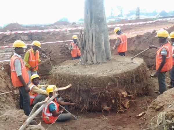 Tree Transplanting services