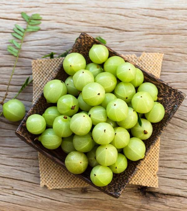 AMLA MD supplier in